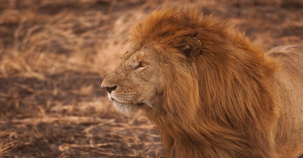 Satara - National Park